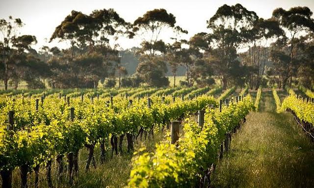 WESTERN AUSTRALIA WINE REGIONS